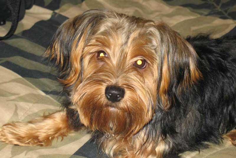 Royal Canin Medium Starter & Medium Adult Review