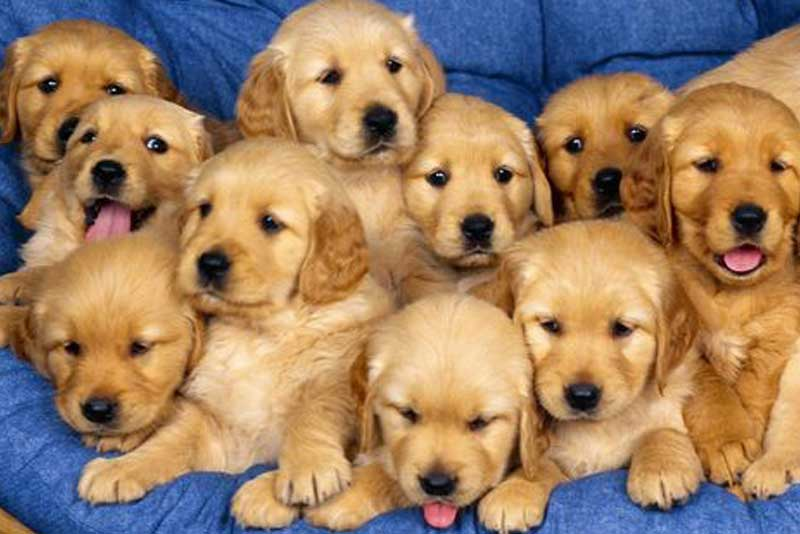 6 Things to Keep In Mind Before Getting a Puppy
