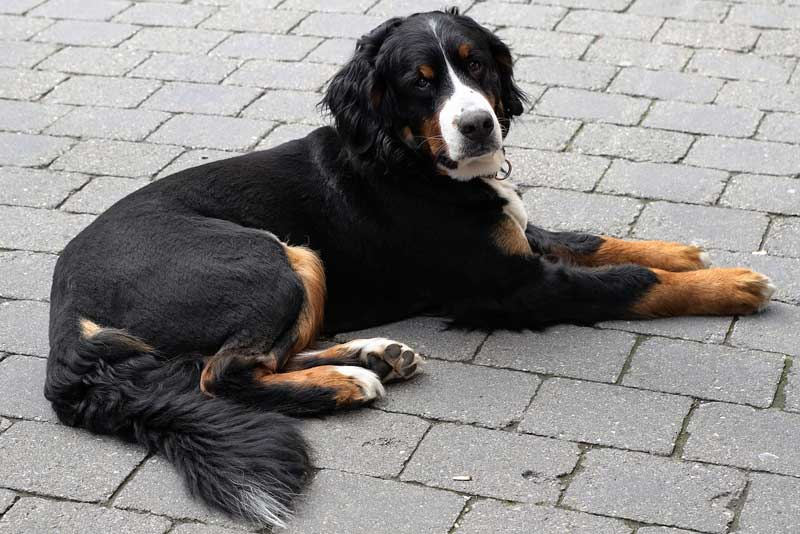 Identify And Treat Your Dog's Tail Injury