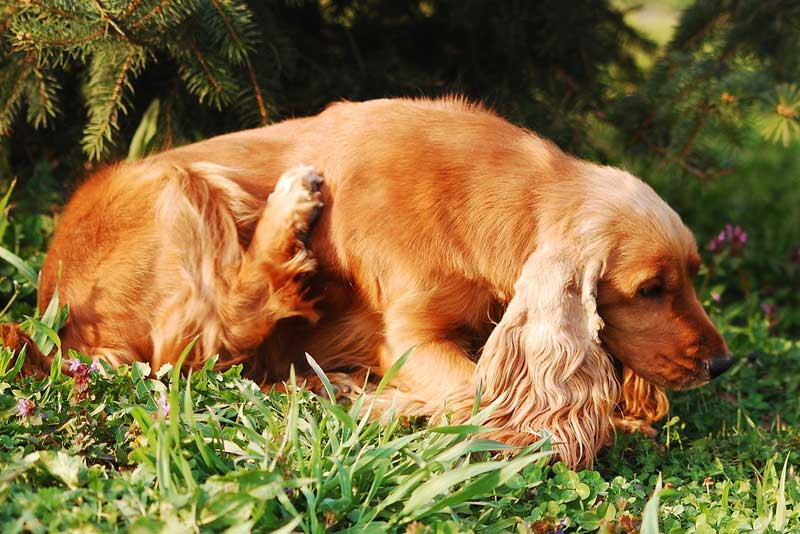 How To Get Rid Of Fleas & Ticks On Dogs