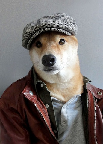 Dressed Dog, Gentle & Sophisticated   Marshalls Pet Zone