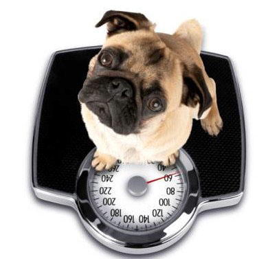 DOG OBESITY: Control Measures And Products