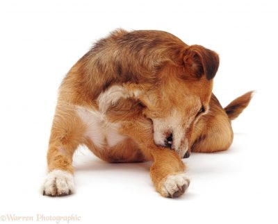Ditch The Itching That Your Pet Suffers: A Complete Solution To Dog Itching