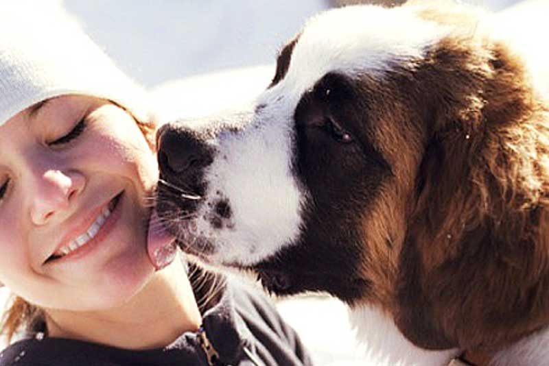 Dog Licking Your Face : Love And Awe