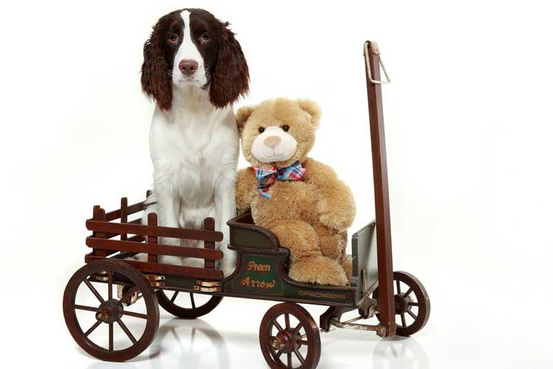 Pet Toys: Playful Companions
