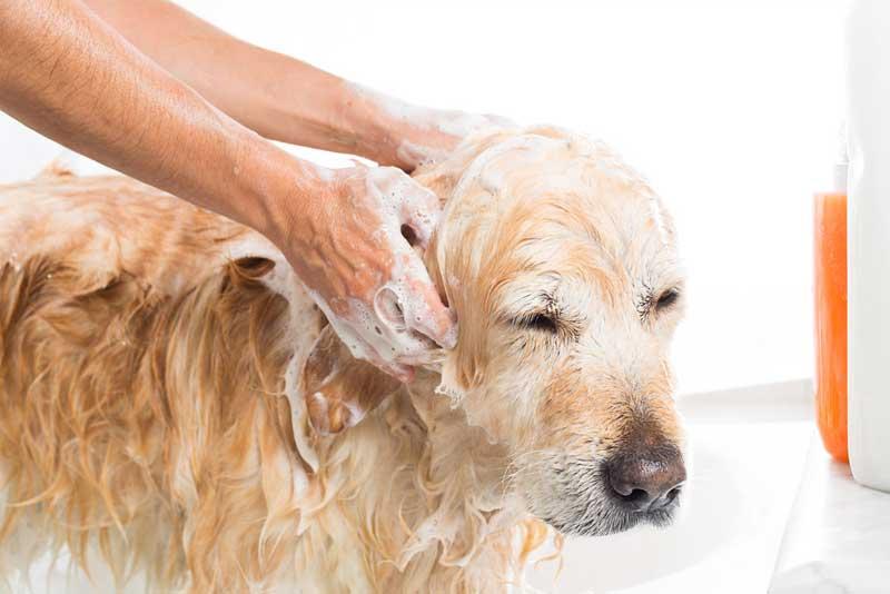 The Best Dog Shampoos