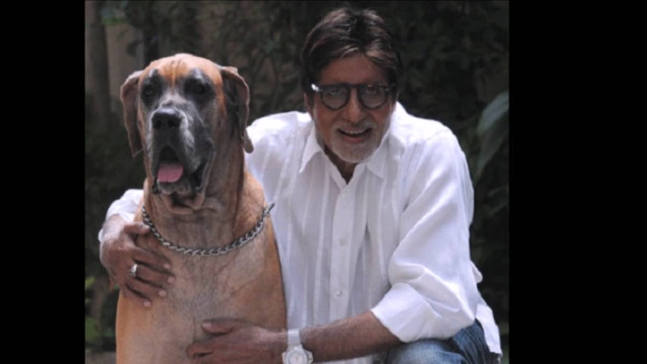 10 Indian Celebrities & Their Pets - Amitabh Bachhan