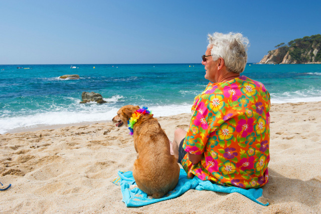 Often Overlooked Ways Pets Sizzle In The Summer