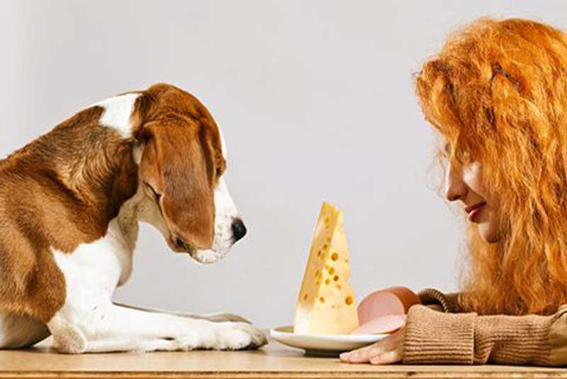 Dog Food- Sharing Is Caring