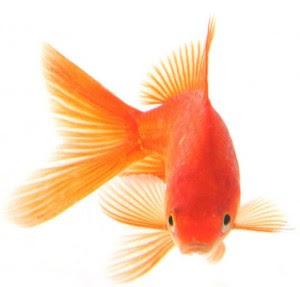 Make Fish Care Easy