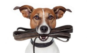 Leash Train Your Dog This Way