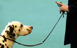 Leash Train Your Dog This Way - Let him control himself