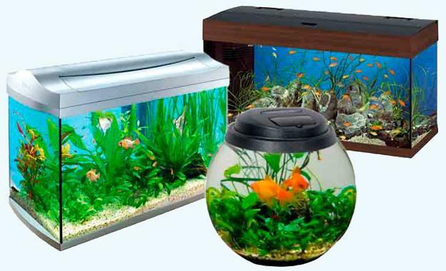 Time to decide the aquarium