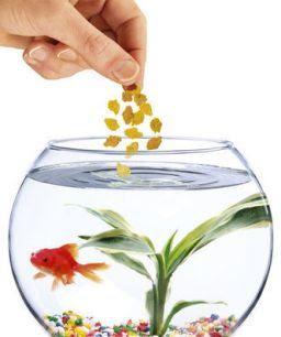 Make Fish Care Easy - food