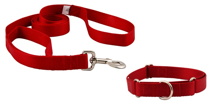 Leash Train Your Dog This Way - Choosing The Right Collar