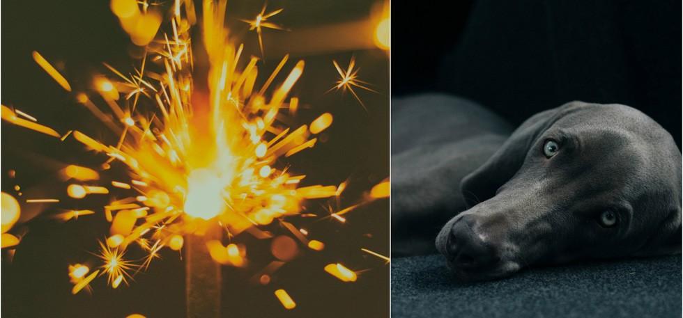 This Diwali Make Your Pet Feel Safe