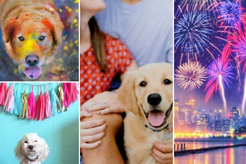 This Diwali Make Your Pet Feel Safe