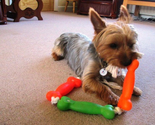 Is Your Dog A Velcro Dog?
