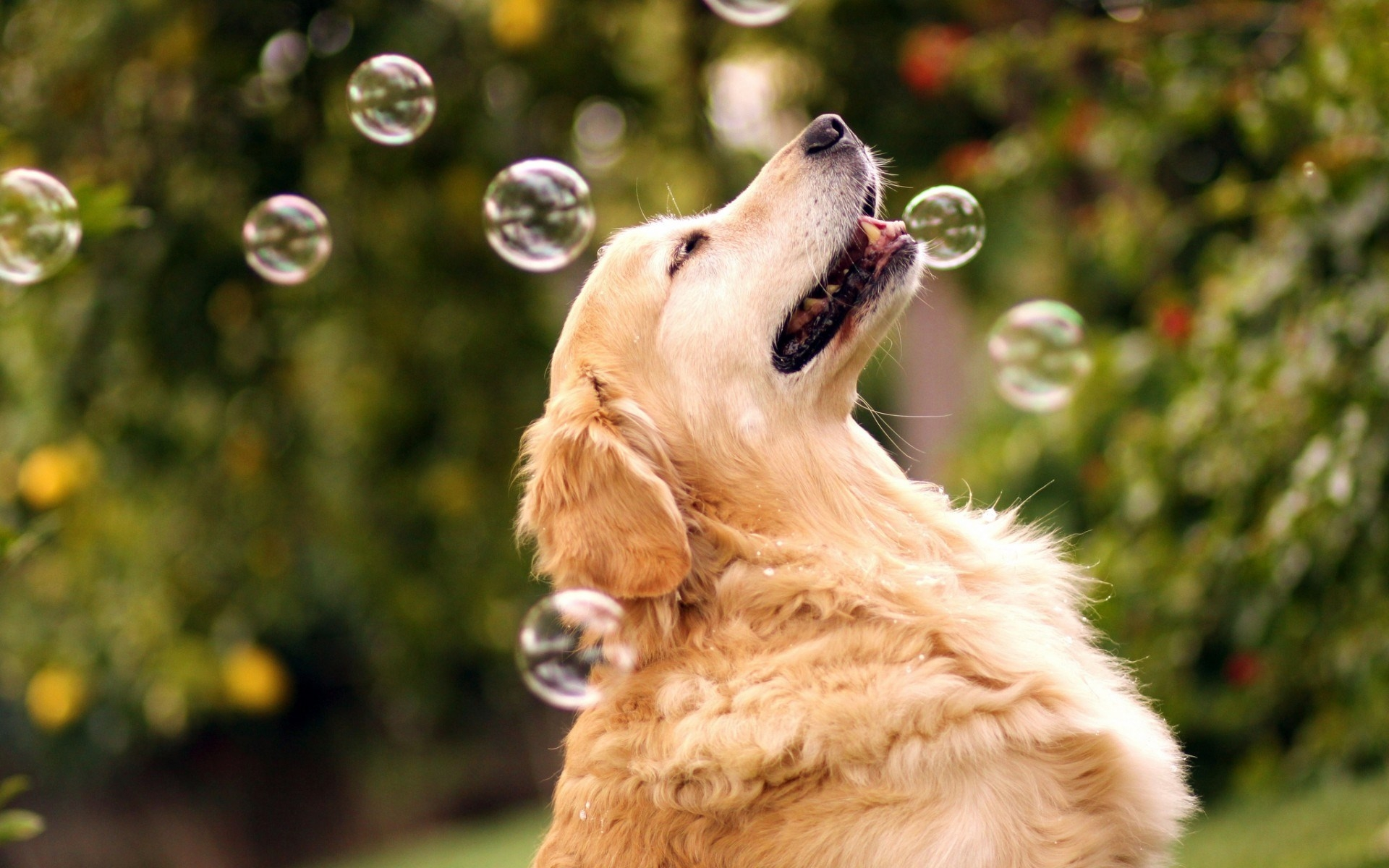 How to tell if your dog is stressed?