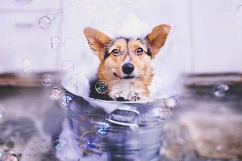 Dog Shampoo Brands : Our Top 3 Budget Picks