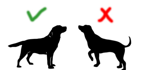 How To Choose The Right Size Of Dog Cage Or Crate? - Posture