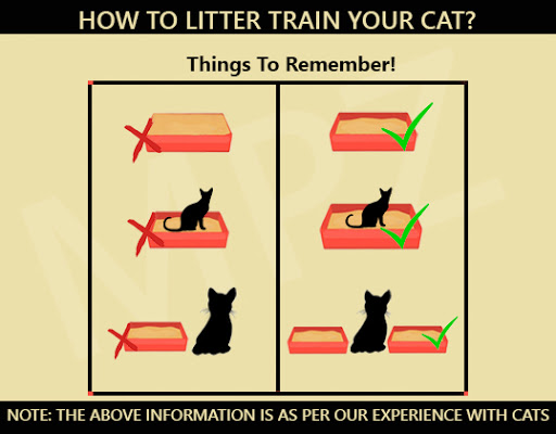 How To Litter Train Your Cat? - Litter Box Size