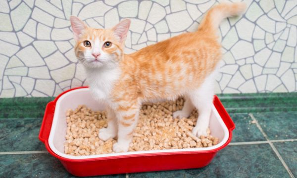 Where Should You Keep The Litter Boxes?