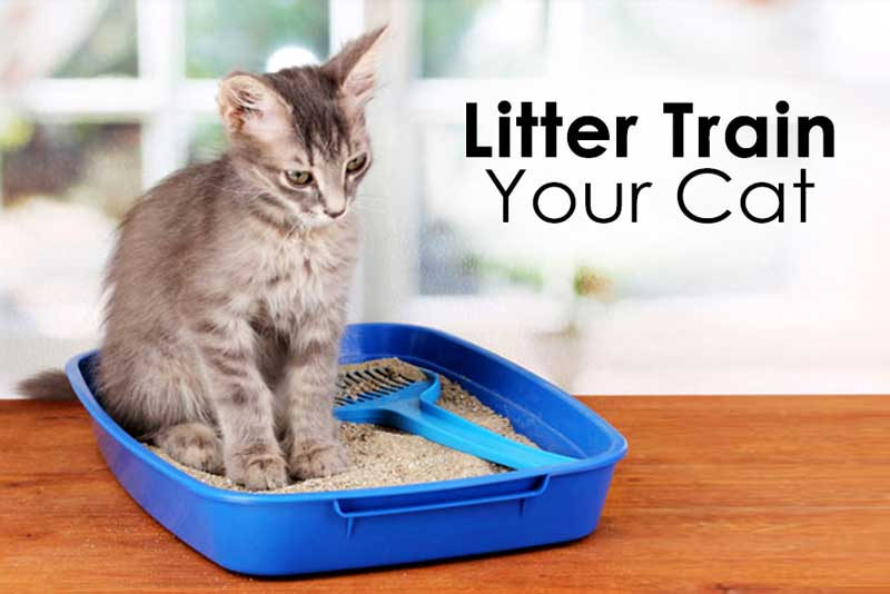 How To Litter Train Your Cat?
