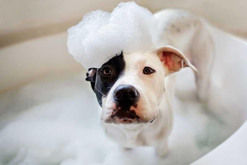 Amazing Groomimg Hacks For Your Pet!