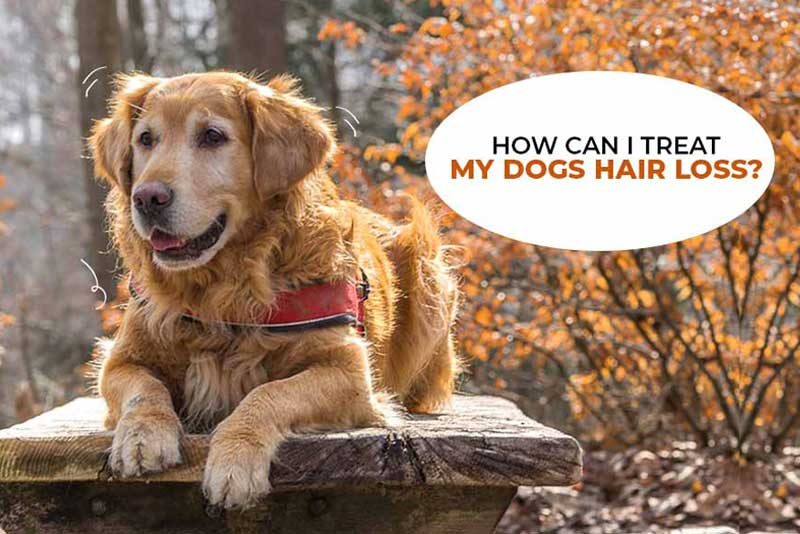 Complete Solution Of Hair-fall & Skin Infection In Dog