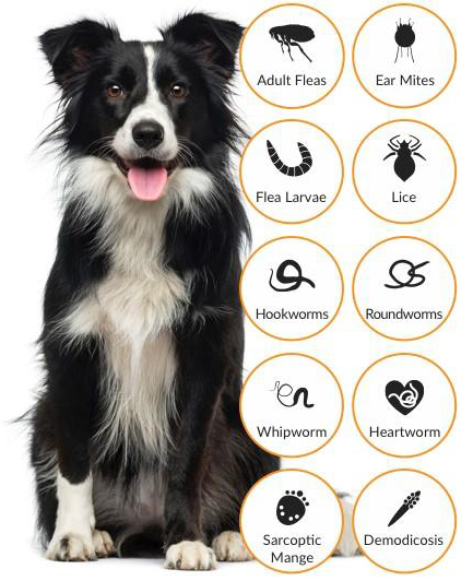 Complete Solution Of Hair-fall & Skin Infection In Dog - Parasites