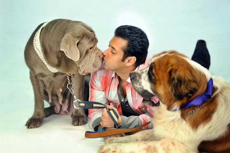 Let's Know Salman Khan's Adorable Bond With His Pet