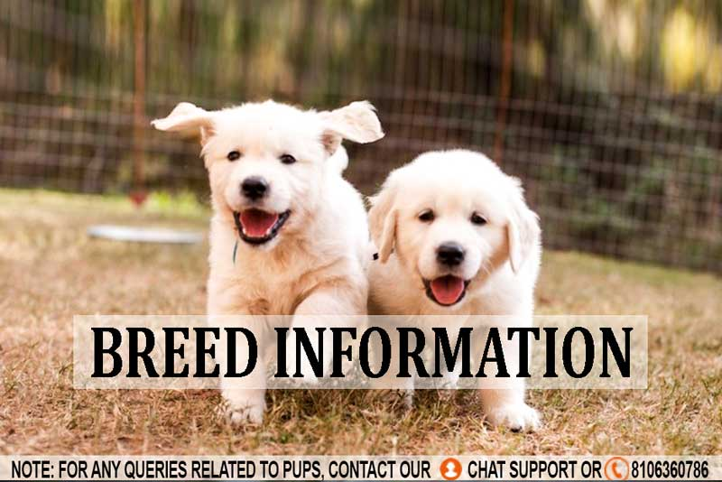 Breed Profile: A Comprehensive List Of Dogs & Cats