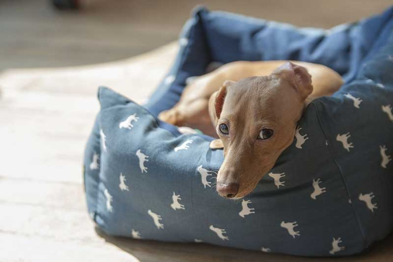Choosing The Best Bed For Your Pet!