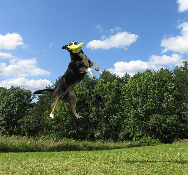 Try To Avoid Too Much Of Exercise Especially In Growing Pups