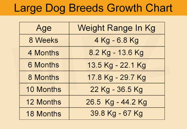 Development Stages And Growth Chart