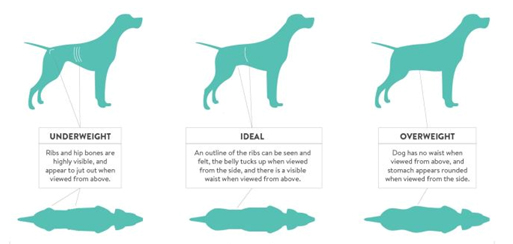 How To Check Your Dog Is Overweight Or Underweight?