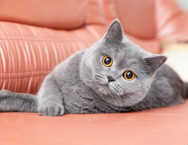 Guide To Cat Breeds A Guide To Cat Breeds Marshalls Pet Zone