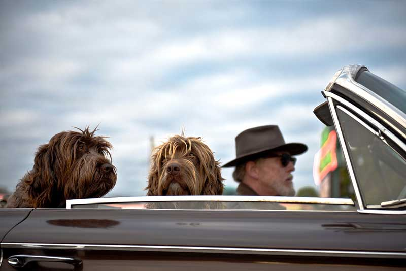 A Hitchhiker's Guide to Travelling with Your Dog