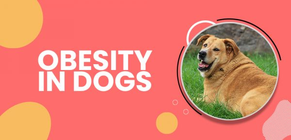 Obesity in dogs health risks