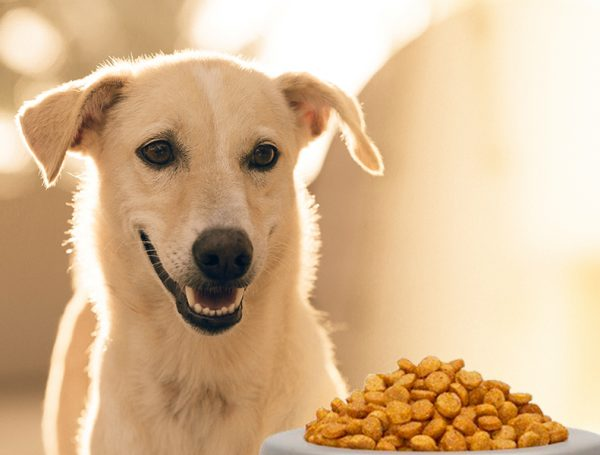 Food For Pregnant Dog
