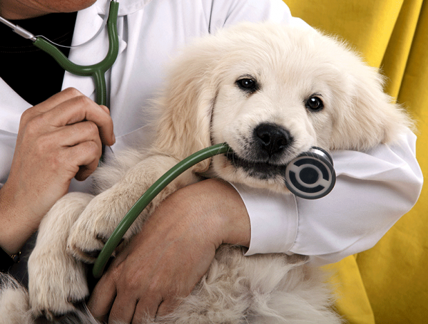 Pregnant Dog care & Delivery Tips