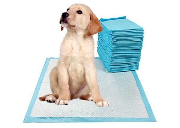 Pets Empire Dog Training Pads