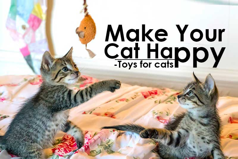 How To Make Your Cat Happy