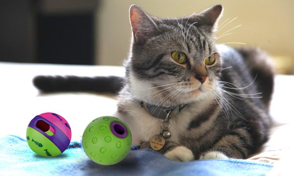 Cat Toys-How To Make Your Cat Happy - ball toys