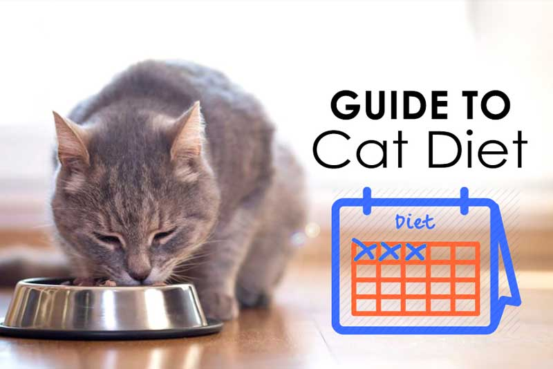 Guide to cat diet- reviewing the top cat food brands