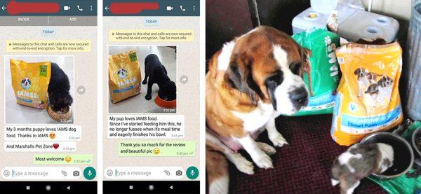 IAMS Dog Food Review