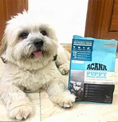 Acana small breed puppy food - Review