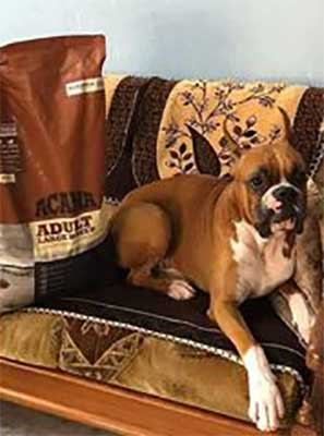 Acana Adult large breed food - Review