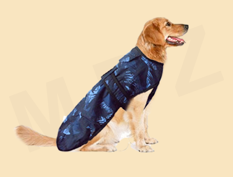 Everything That Your Pet Need This Winter